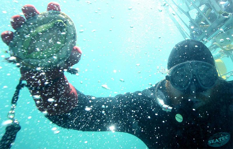 Bào ngư Úc tươi sống